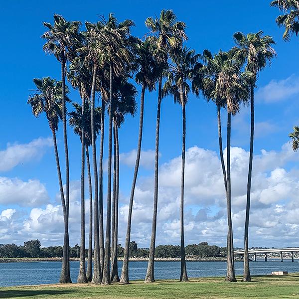 Sunset Point Park: 1400 Dana Landing Road, SD 92109